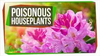 9 Poisonous Plants You Might Have Around Your House