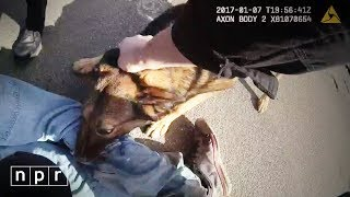 Can Gory Police Dog Arrests Survive The Age Of ? | NPR