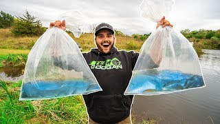 STOCKING my BACKYARD POND for the FIRST TIME!!! (Tons of Fish)