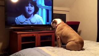 Bulldog watches a horror movie, does something INCREDIBLE during scary scene