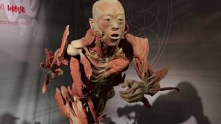 Real Bodies Museum Exhibit Review - Warning! Real Preserved Human Specimens in !