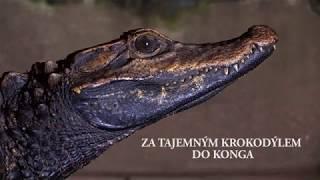 Za tajemným krokodýlem do Konga - TRAILER (český)