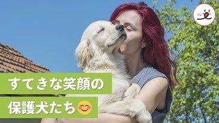 保護犬たちは大家族になった❤️ 犬たちを笑顔にする、個人が始めた保護施設🌱【PECO TV】