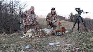 Coyote Hunting ″Overrun″
