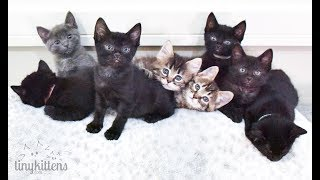 LIVE: Kittens with Sister Moms Angela and Shirley! TinyKittens