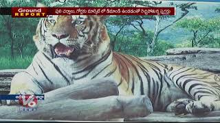 Ground Report | No Security To Tigers In Kawal Wildlife Sanctuary | Adilabad District | V6 News