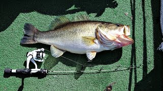 Ice Fishing Rod Lands Giant Bass!! (4 lb. Test)
