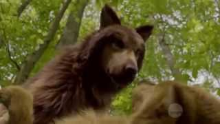 ″Bitten″ TV Series - Howl