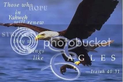 WingsLikeEagles.jpg Soar On Eagles Wings (Isayah 40:31) picture by Frank4YAHWEH