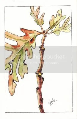 White Oak Leaves - Watercolor