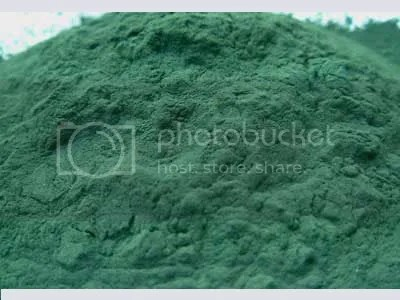 Spirulina Pictures, Images and Photos