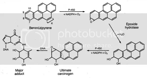 Carcinogenesis from Benzopyrene (Smoke Component)