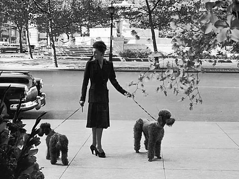 Woman walking her poodles