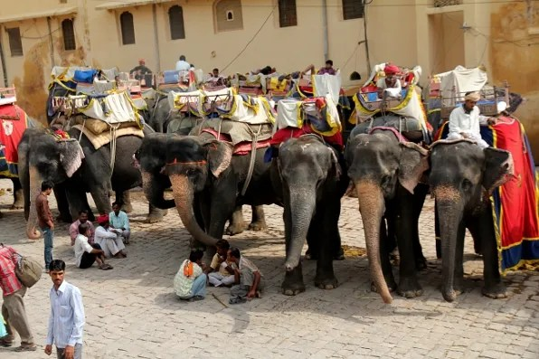 Elephant Parking Lot at Amber Palace, Jaipur