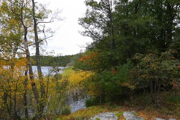 Flottsbro forest, Stockholm Sweden in the fall