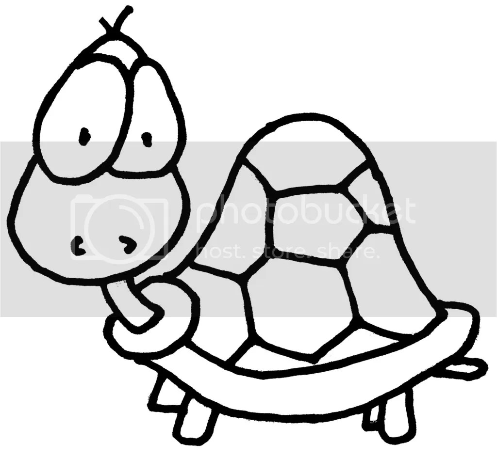 Imagenes De Tortugas Wiring Diagram Database