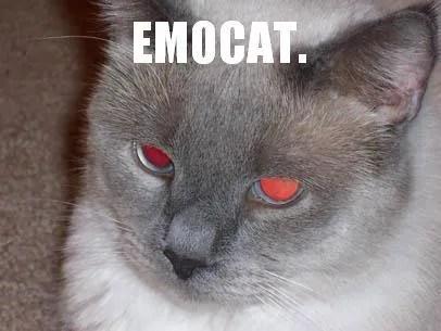 Emocat feels bad about the iPod.