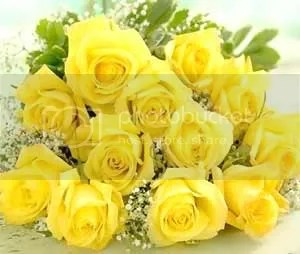 YELLOW ROSES Pictures, Images and Photos