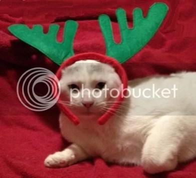Tom the Office Cat Reindeer