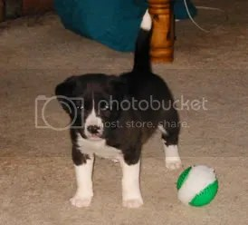 Kinsey as a Puppy