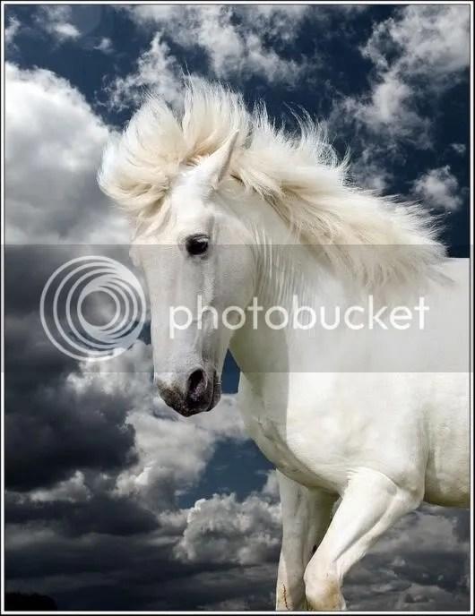 Feel the Beauty of White