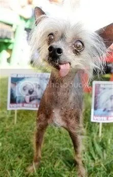 World's Most Ugliest Dog Contests