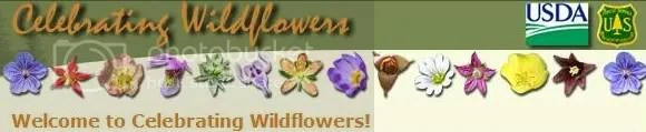 American Indian,Native American,youth,bee,bees,Marquette,Michigan,Upper Peninsula,Baraga,teens,teenagers,pollinators,pollen,pollinating,butterflies,butterfly,honeybees,bumblebees,environment,native plants,species extinction