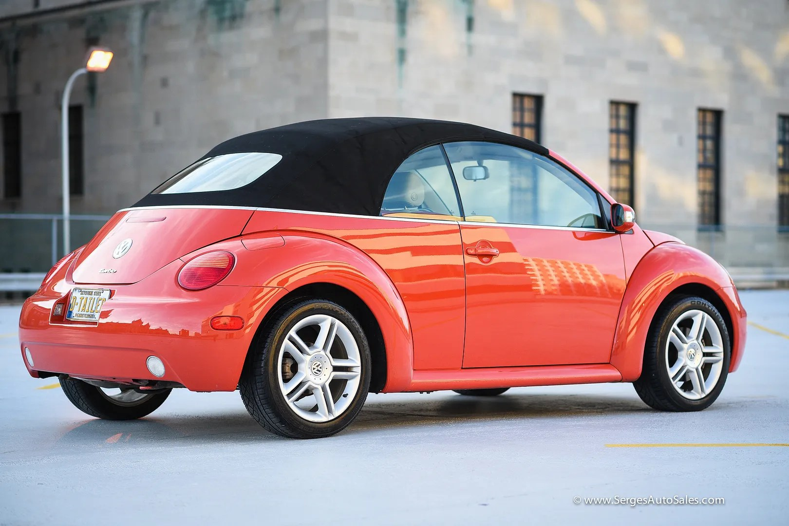 photo beetle-14_zps7yum676d.jpg
