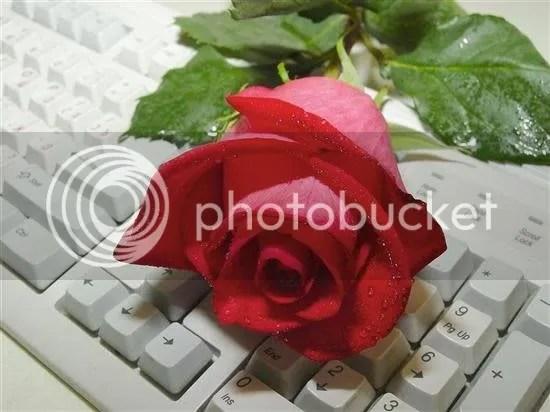 rosa.jpg Amicizia image by annalisa63