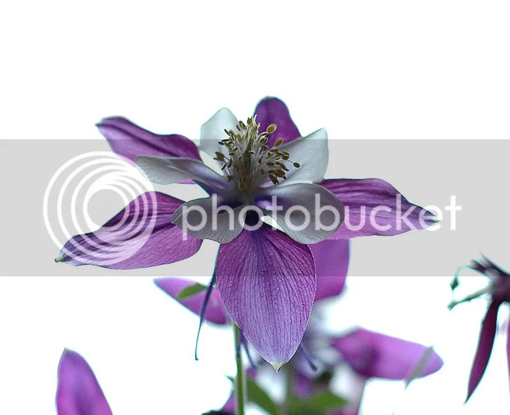 photo Flower1000x_zps87d4f4d4.jpg