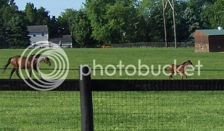 photo foal2_zps8e5a4b51.jpg