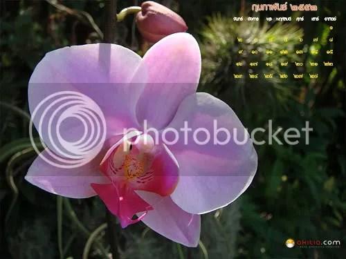 สวัสดีปีใหม่, ปฏิทิน, Calendar, ๒๕๕๑, 2551, 2009