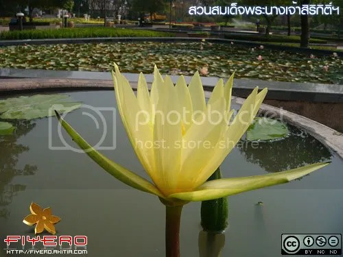 สวนสมเด็จพระนางเจ้าสิริกิติ์ฯ, สวนสาธารณะ, ต้นไม้, ดอกไม้, ธรรมชาติ, ท่องเที่ยว