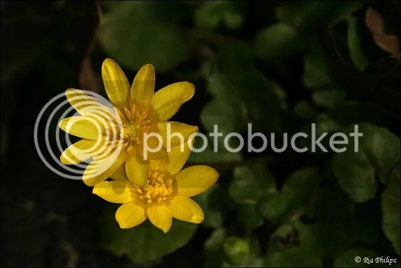 photo IMG_7777_zps550638f6.jpg