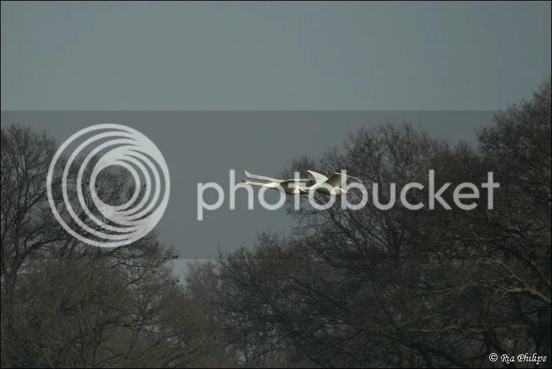 photo IMG_7499_zps44e035a7.jpg