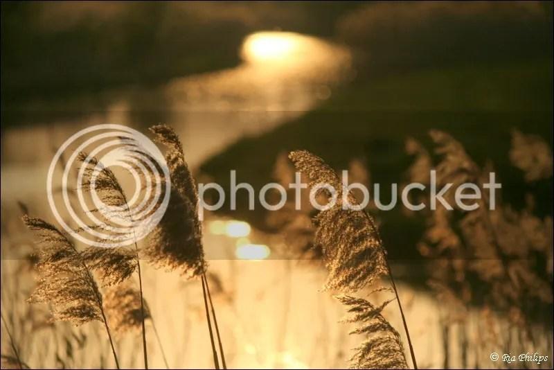 photo IMG_9295_zpse53488f6.jpg