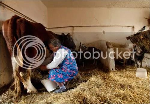 Helena Master milks a cow on a farm in Stryszow, Poland. Photo: Rafal Klimkiewicz for The New York Times