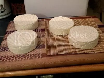 Raw Guernsey Organic Amish milk makes the difference for great Camembert.