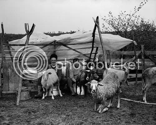 Milking goats in Romania. Photo Tim Clayton, Sony World Photo Awards.