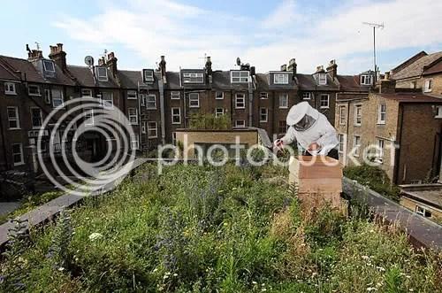 Beehive on an urban rooftop garden in Hackney, London. Photo Dan Kitwood, Getty
