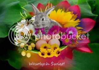 rabbit photo rabbit-1.jpg