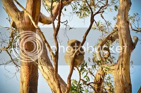 Da Alice Springs a Sydney photo DSC_2113_zpse5e5c202.jpg