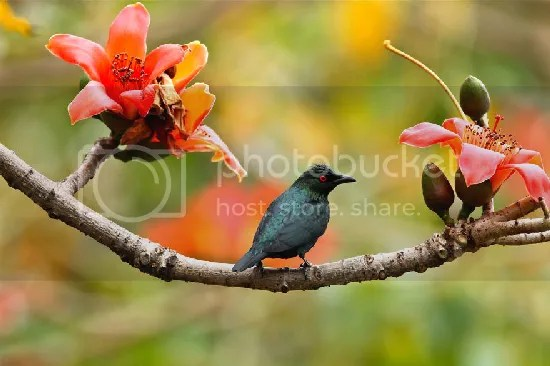 photo bird-photography-sue-hsu-5__880.jpg
