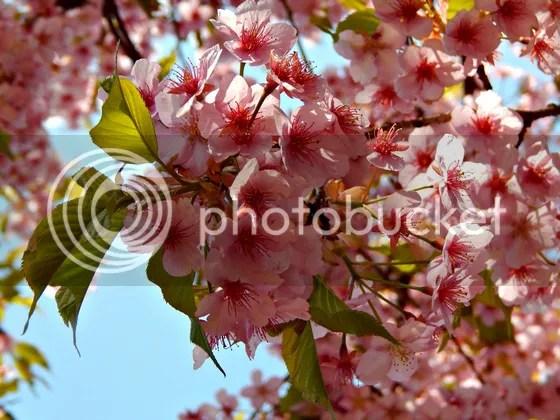 photo japan12.jpg