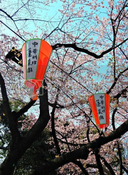 photo japan19.jpg