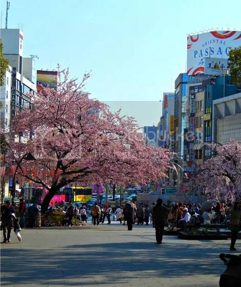 photo japan21.jpg