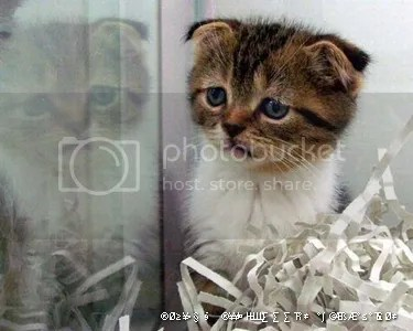 Unduh 61+  Gambar Kucing Lagi Sedih Paling Lucu Gratis