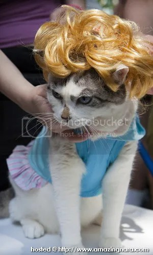 Gambar Kucing Rambut Ml godean.web.id