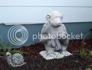yard chimp close
