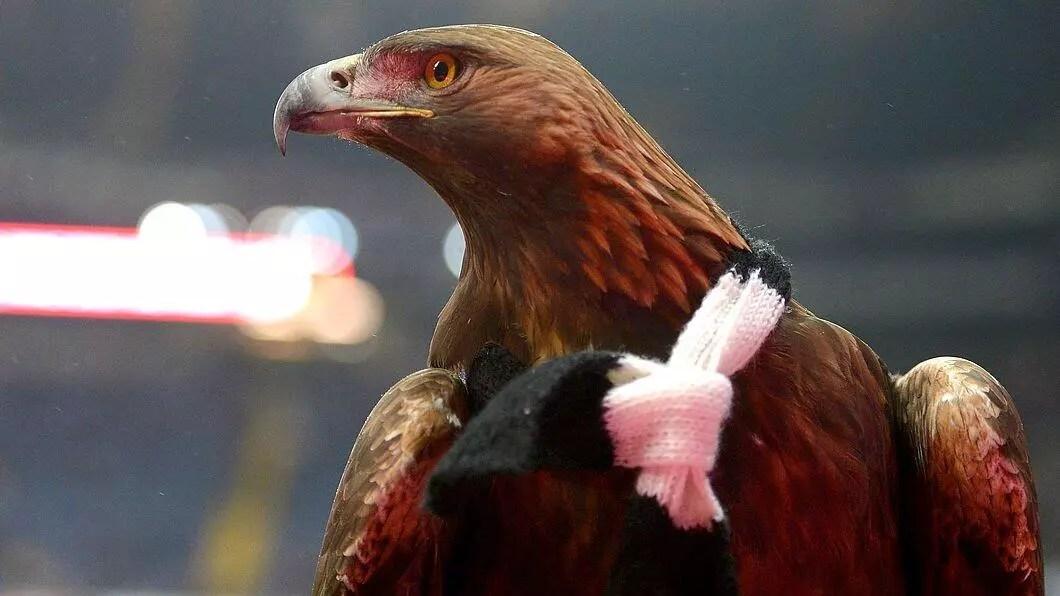 Koronavirüs onu da vurdu! Atilla'ya Bundesliga maçında uçuş müsaadesi verilmedi... 1